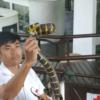 【スネークファーム】ショーを見たり蛇を巻いて写真を撮ったり